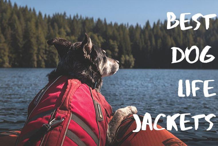 A dog wearing life jacket