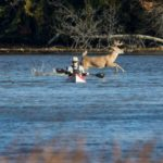 Buck Photobombing A Kayaker Is The Latest Viral Story