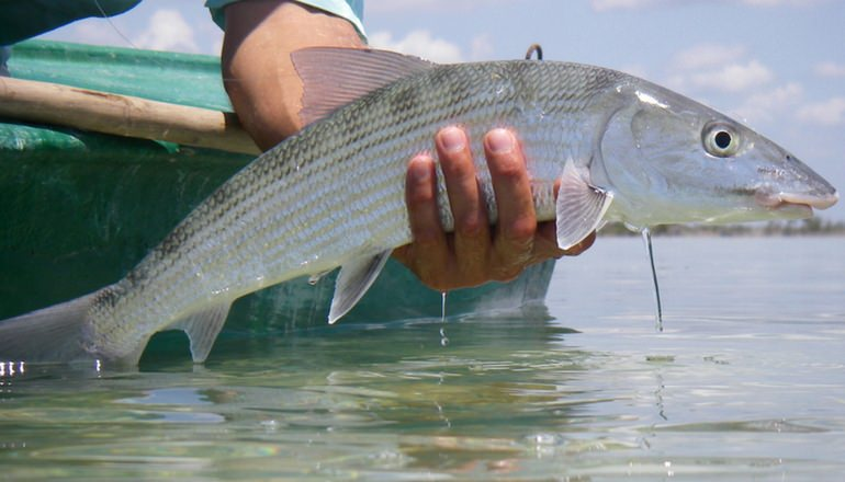 Punta Gorda Belize fishing